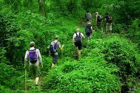 Jambi Luncurkan Indeks Tata Kelola Hutan Tingkat Provinsi Pertama di Indonesia