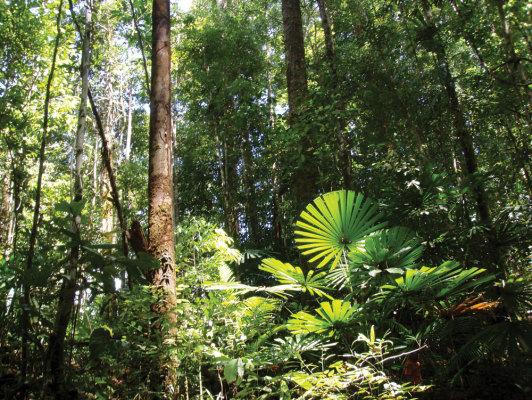WWF Serukan Partisipasi Multi Pihak Untuk Dukung Konservasi Orangutan di Borneo