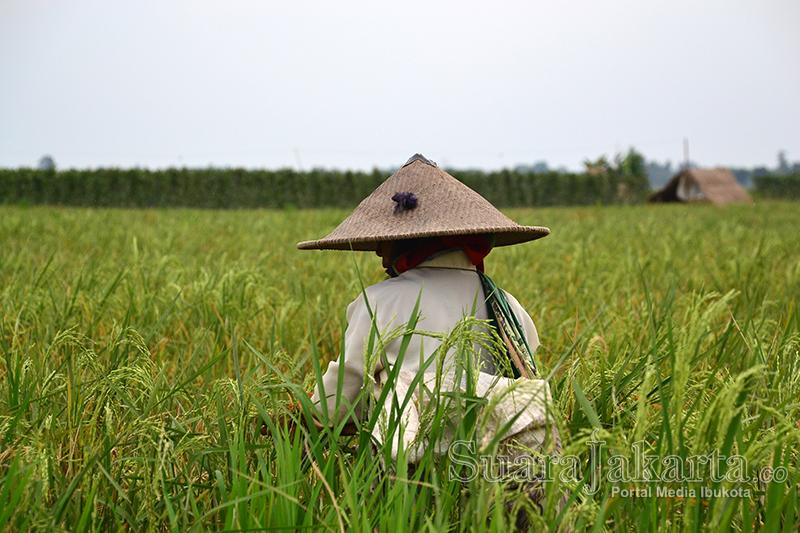 Jaga Ketahanan Pangan, Mantan Menteri Pertanian Era SBY Ini Minta Pemerintah Ubah Status Perum Bulog