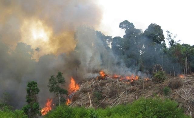 Penerbitan SP3 Pada Kasus Pembakaran Hutan Menuai Keritik Aktivis
