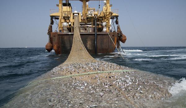 HIPMI Beri Solusi untuk Minimalisir Illegal Fishing