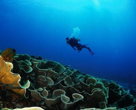Ini 4 Spot Diving Terkeren Di Indonesia
