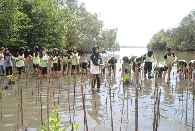 UT Bersama YAPEKA, PILAR Indonesia dan Komunitas Mangrove Bengkulu Restorasi 10000 Bibit Mangrove