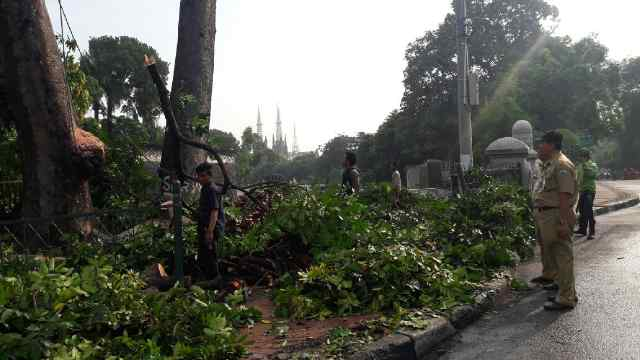 PPSU dan PHL Sudin Pertamanan Jakpus Kerjasama Atasi Pohon Tumbang