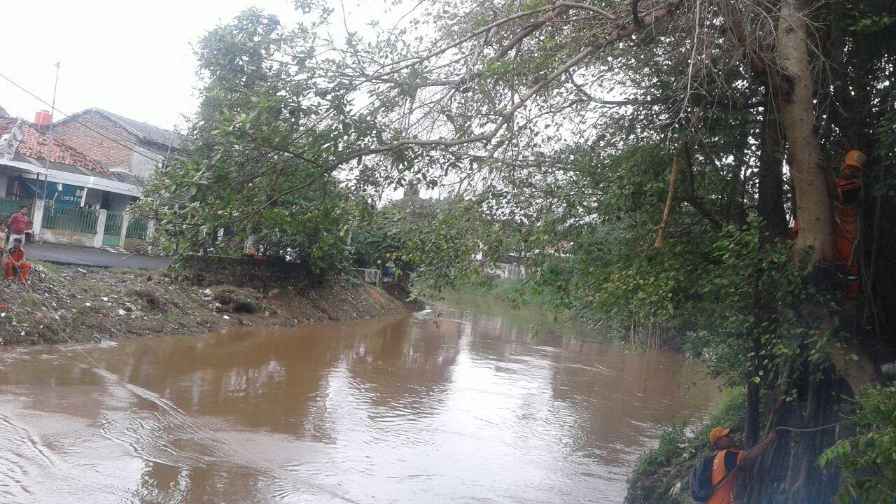 Warga Pegangsaan Minta Kelurahan Tebang 2 Pohon Yang Berusia 30 Tahun