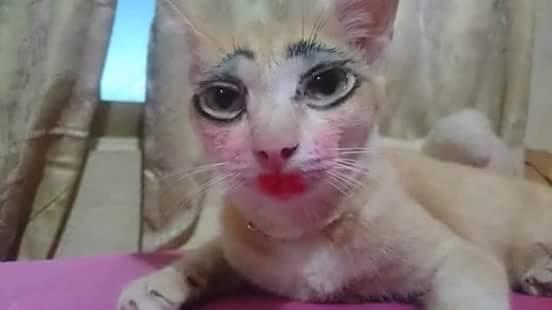 5 Foto Kucing Saat Dimake Up, Unik dan Bikin Perut Sakit Karena Nahan Tawa