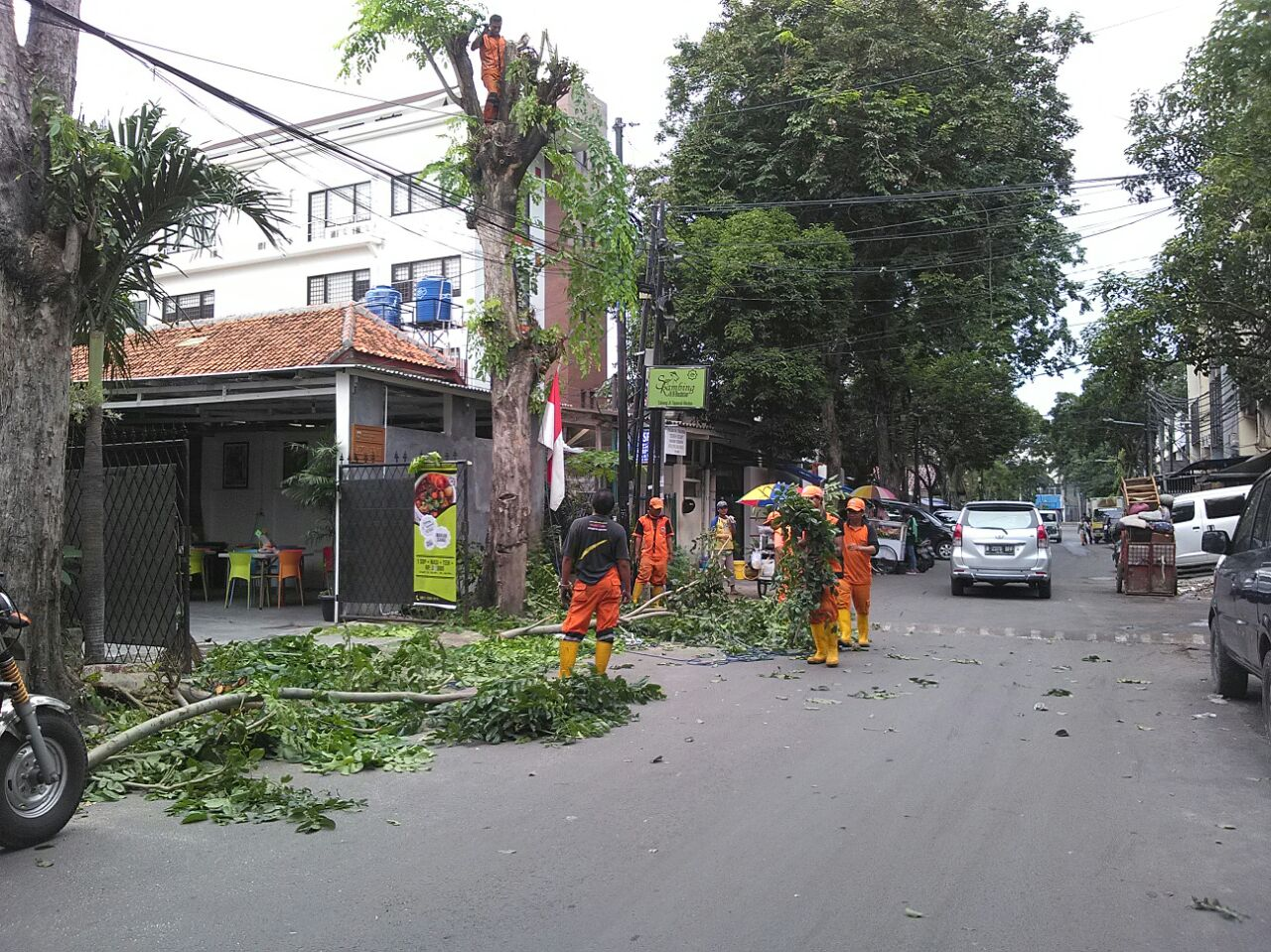Dua Pohon Angsana Yang Menutupi Lampu PJU Jalan Kaji Dipangkas Petugas
