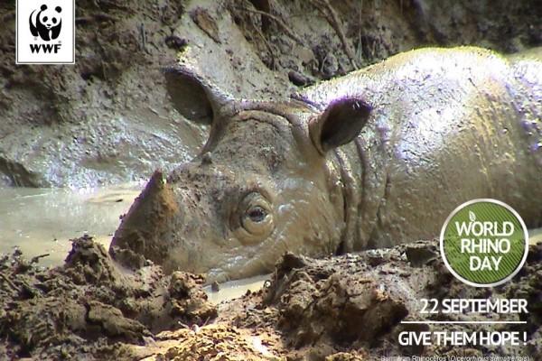 Menyelamatkan Badak Tersisa di Bumi Kalimantan