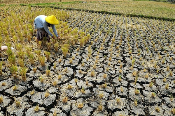 Ancaman kenaikan muka air laut dan meningkatnya resiko rawan pangan akibat kekeringan di Indonesia