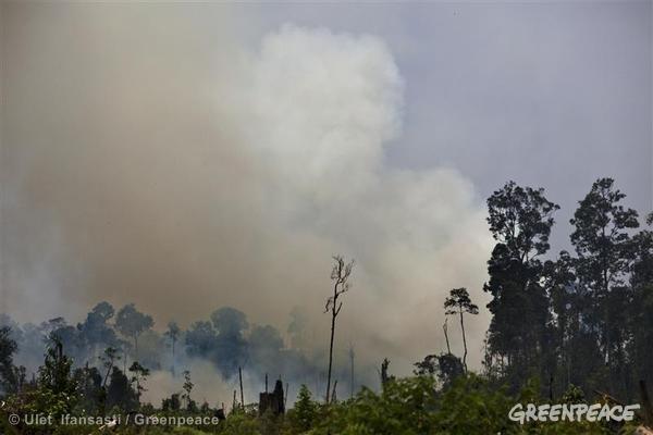 Lemah Dalam Penanggulangan Asap, Pemerintah Ditantang Tetapkan Bencana Nasional