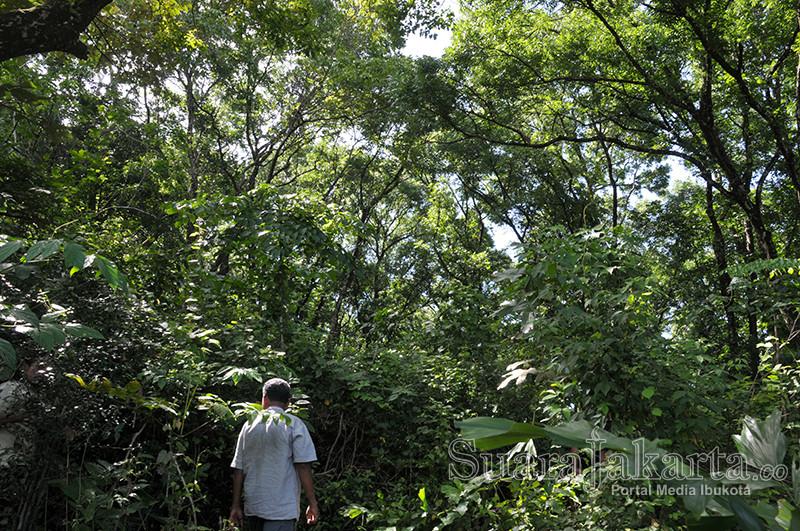 suara-jakarta-hutan-pohon-hijau-banten-pandeglang