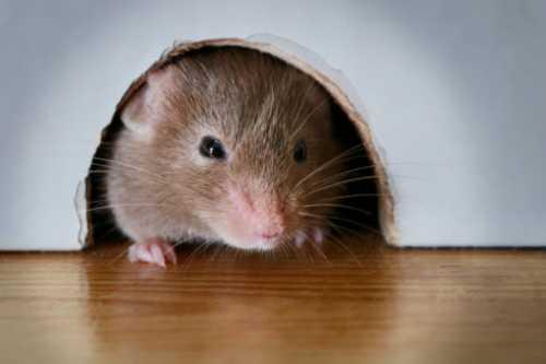 Gedung G Balai Kota Jorok, Habiskan 200 Juta untuk Berantas Tikus