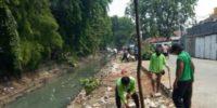 500 Pohon Mahoni Ditanam Di Kawasan Kali Baru Untuk Antisipasi PKL