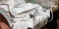 Proyektil Peluru Teror Rumah Jazuli Ditemukan
