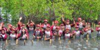 AHM Kembangkan Wisata dan Ekonomi Pesisir dengan Mangrove